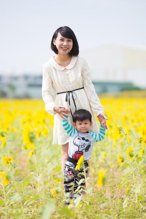 台南私藏景點-新市花海節 (5)
