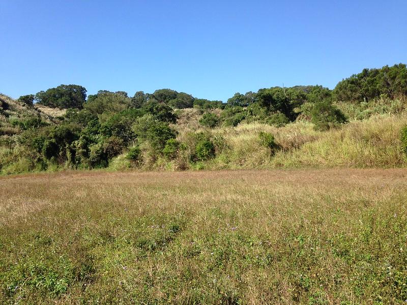 苗栗縣仍保有適合石虎以及淺山生態系物種生存的環境。
