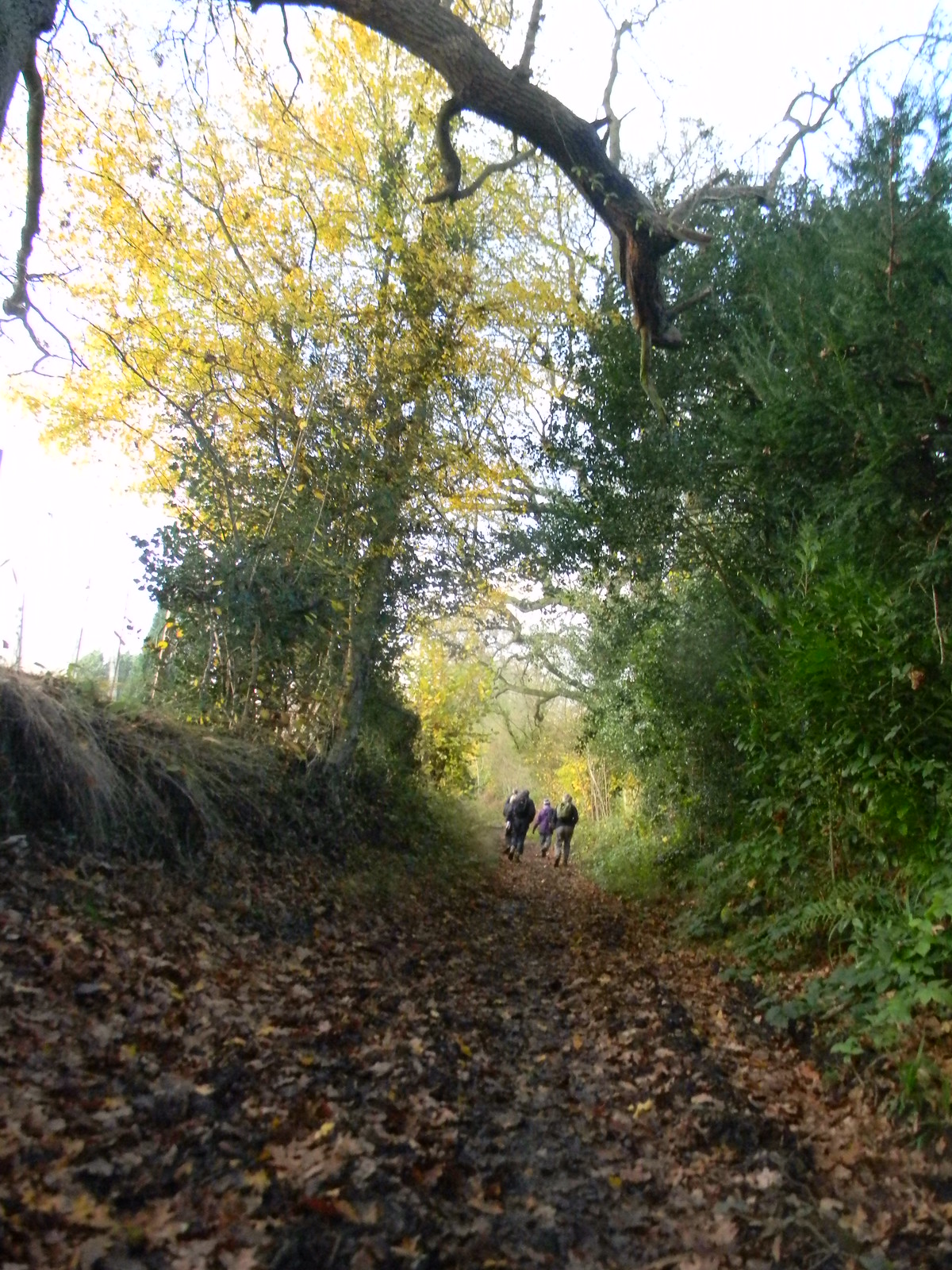 Up the bridleway 2 Leigh to Sevenoaks Muddy tortuous steep but at its picturesque best.