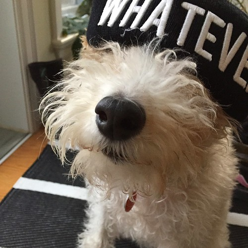 Whatever dawg.