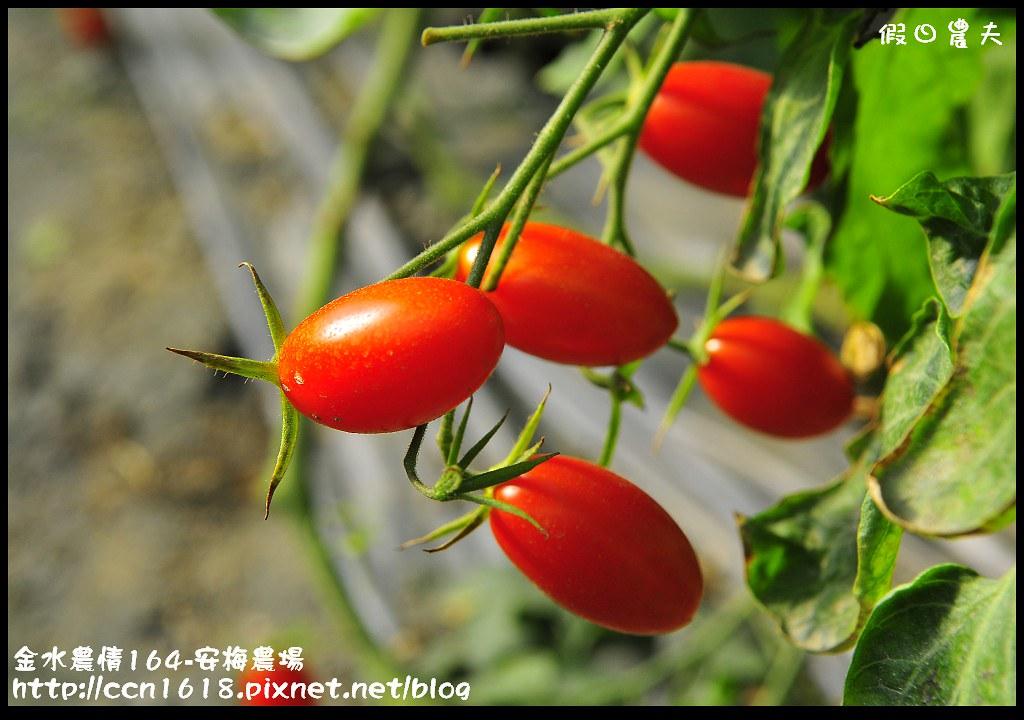 金水農情164-安梅農場_DSC8338
