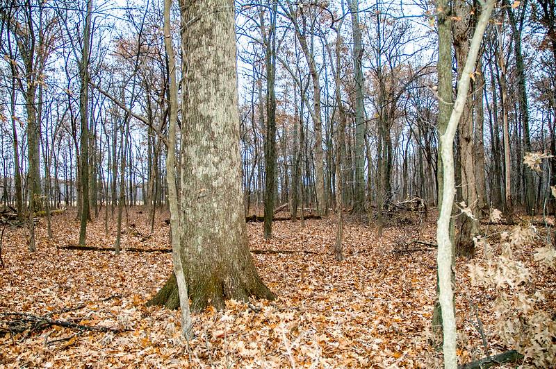 Saunders Woods Nature Preserve - November 25, 2014