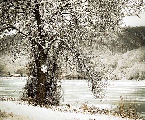 park trees winter snow nature minnesota landscape midwest scenery december winona snowcovered frozenlake bluffland