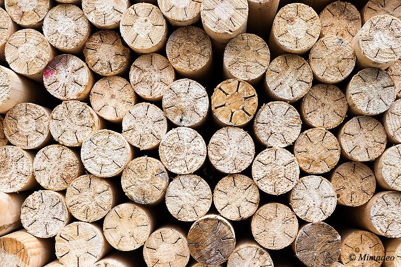 circular wood texture pattern