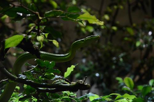 Schlange im Züricher Zoo