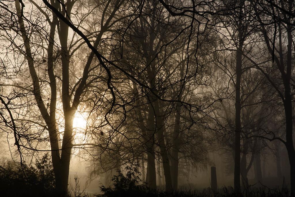 graveyard in winter sun