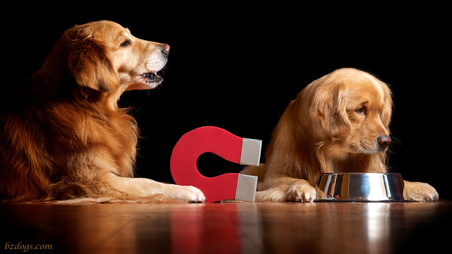 Canine Caper