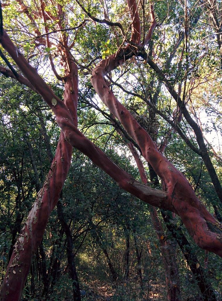 Красное дерево-холодильник