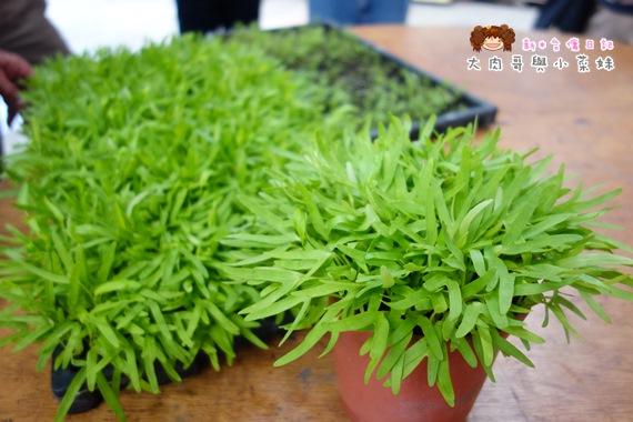 頭城農場植物 (3).JPG