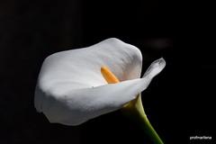 the color white