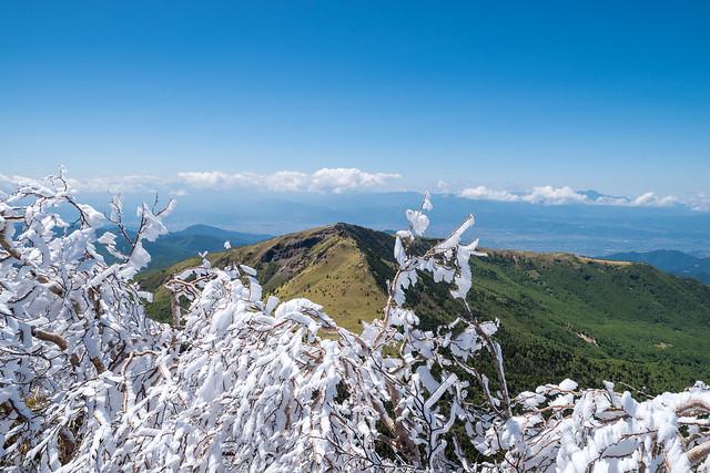 四阿山の霧氷越しに根子岳を眺める