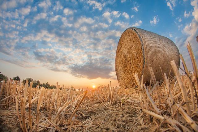 tramonto nel campo