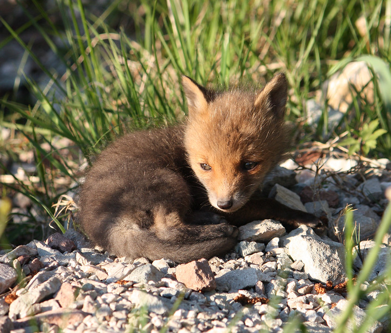 fox22