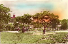 Mountsfield Park Postcard