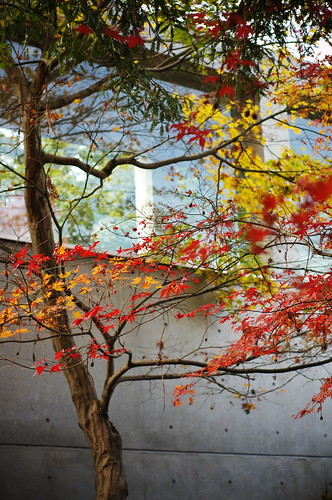 colored leaves and modern architecture