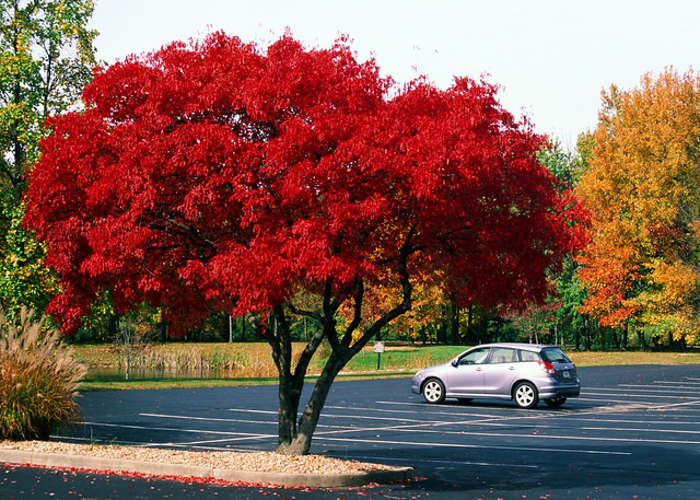 Red tree parking lot *EXPLORED*