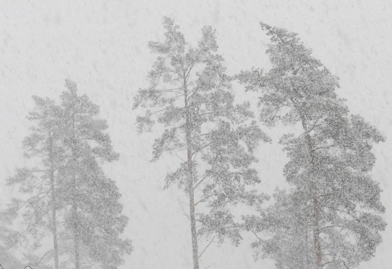 talvista3
