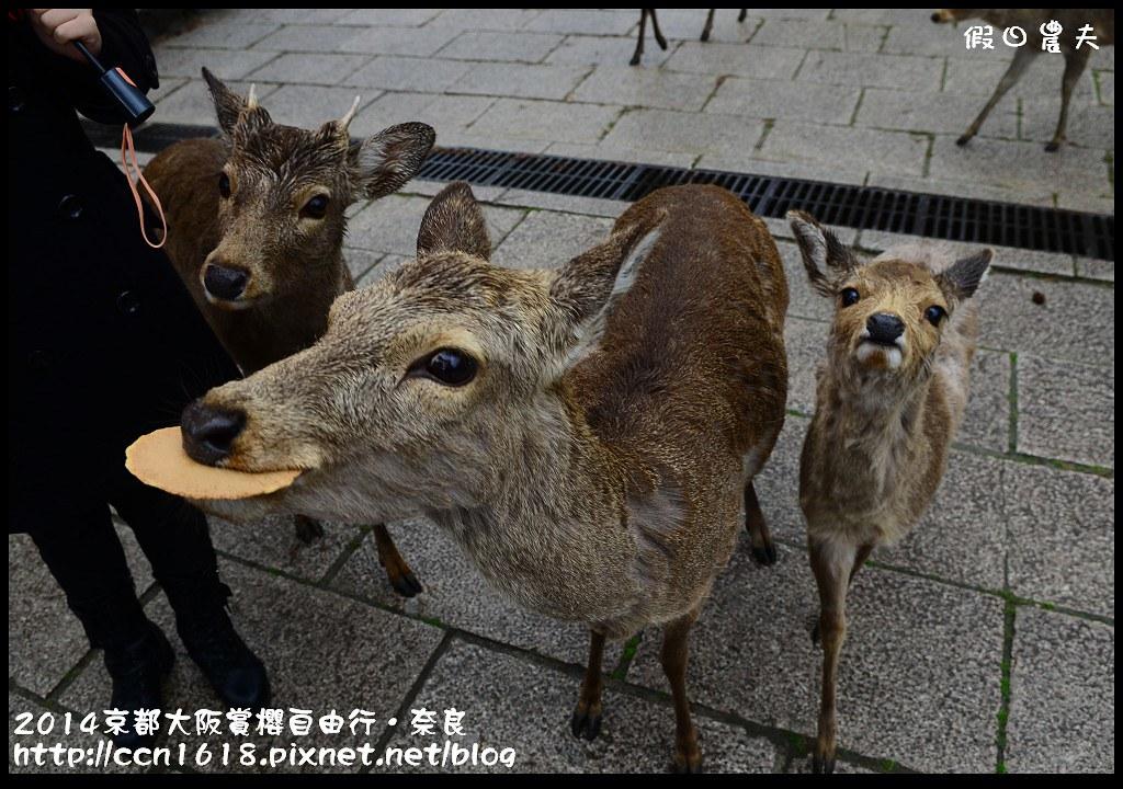 2014京都大阪賞櫻自由行.奈良DSC_0988