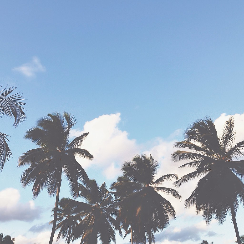 Palm trees, blue skies | Punta Cana
