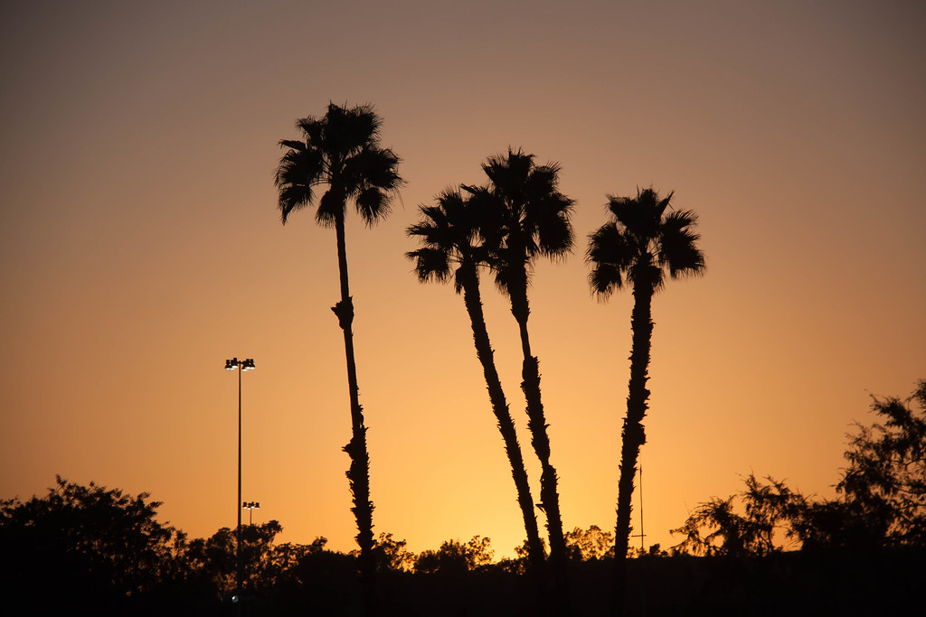 Palm Trees at Sunset Moon Block Party - Pomona, California
