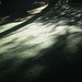 Bodnant Garden by Billy Reed