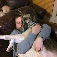 And you can never forget the Rileyberry being Daddies girl. #shepsky #puppy #GSD #germanshepherddog