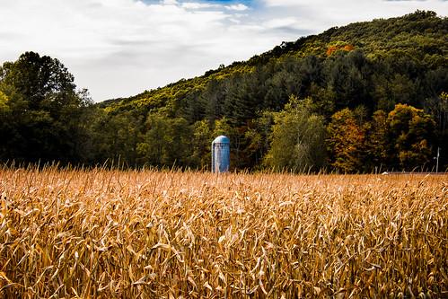 美國俄亥俄州的玉米田與穀倉。圖片來源:nov 2874@Flickr。