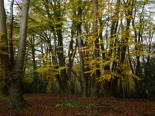 Beeches Epping 16