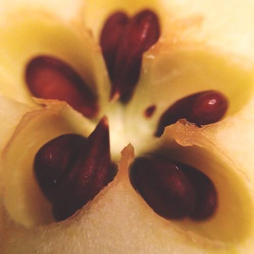 December 1 - Fruit