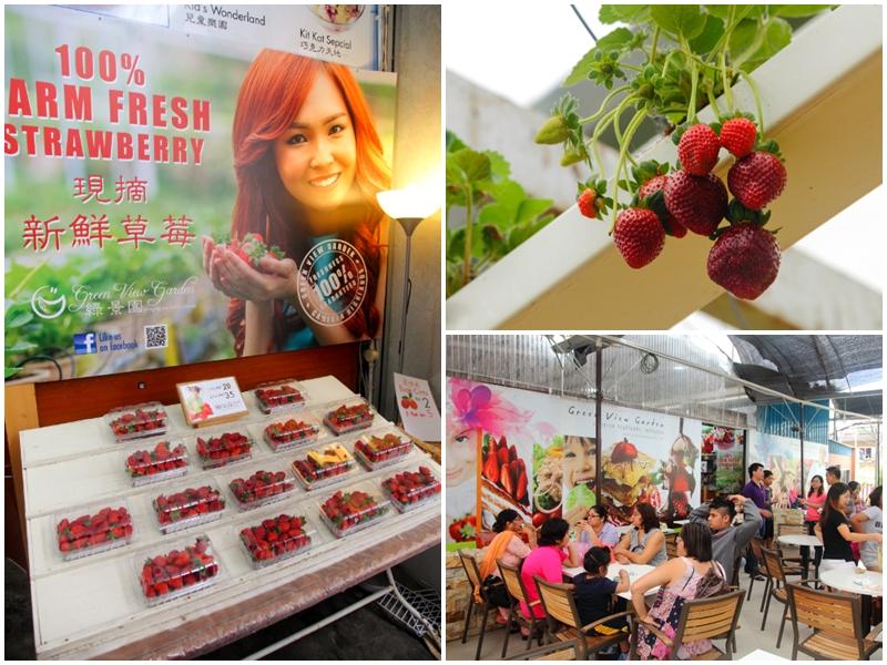 Strawberry Moment Cameron Highlands