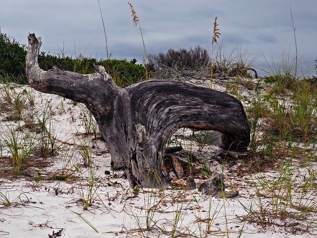 Florida Driftwood Beach