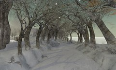 Skye Enchanted Tree Tunnel main - often used in enchanting/photogenic situations