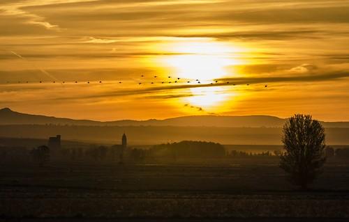 naturaleza sunrise landscape alba natura paisaje teruel paissatge bello aube aragón terol aragó albada d7000 lagunagallocanta gallocantalagoon llacunagallocanta gallocantalac