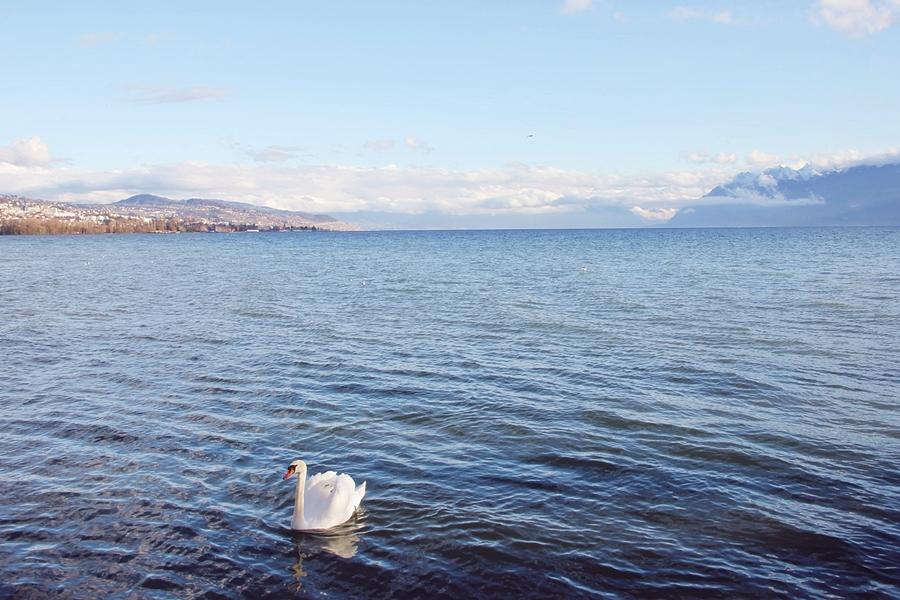 Lac Léman (4)