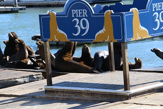 Sitting by the dock of the bay.  San Francisco, California