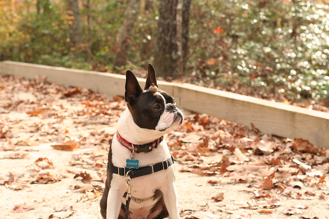 James River State Park Fall 2014 (91)