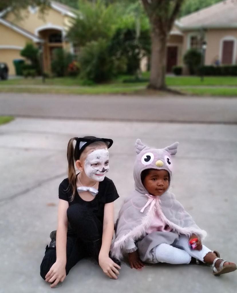 Cat & Owl