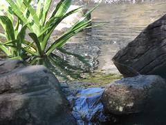 Alexandra Park,Bundaberg