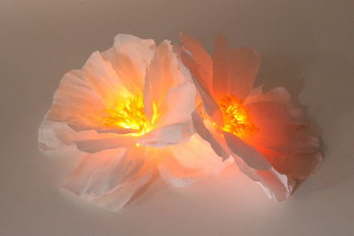Carrera Peony Light - Zipper 8 Lighting