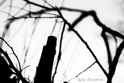 Branches and thorns