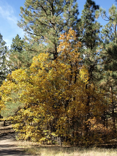 autumn arizona fall parks flagstaff urbanparks buffalopark flagstafftrip102014