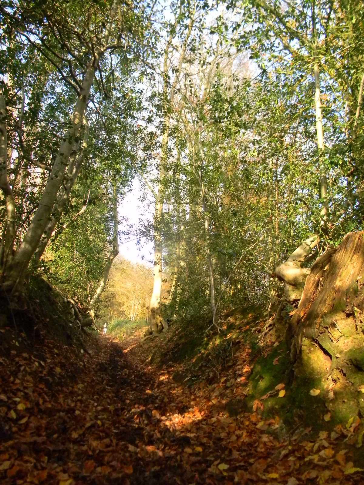 Up the bridleway 4 Leigh to Sevenoaks Muddy tortuous steep but at its picturesque best.