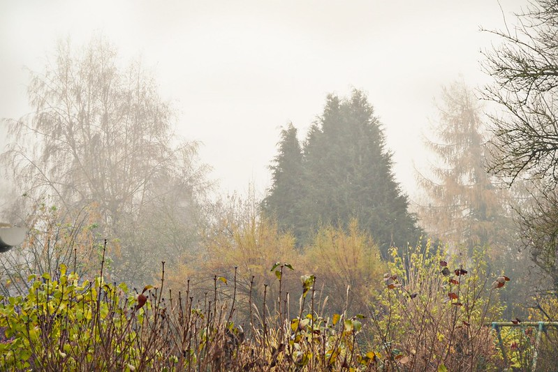 neblina en Braine