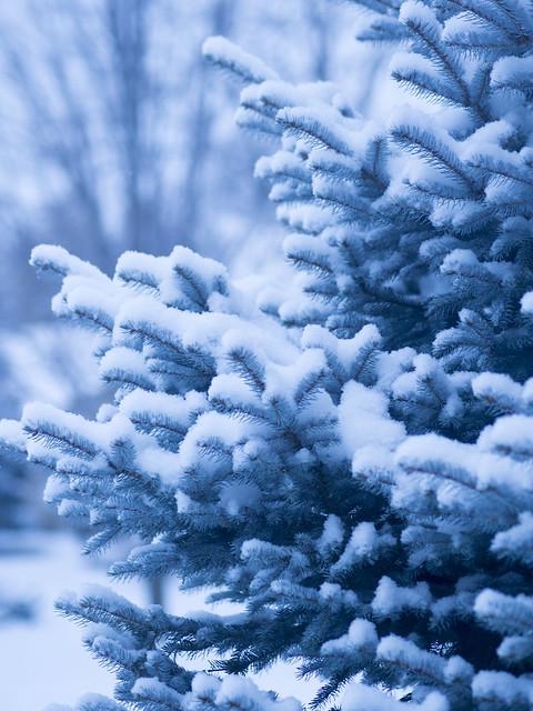 Winter2014-1