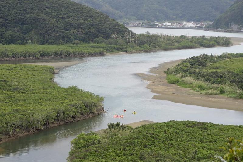 奄美大島マングローブ