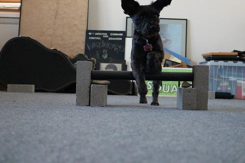 agility training for Bailey (32)