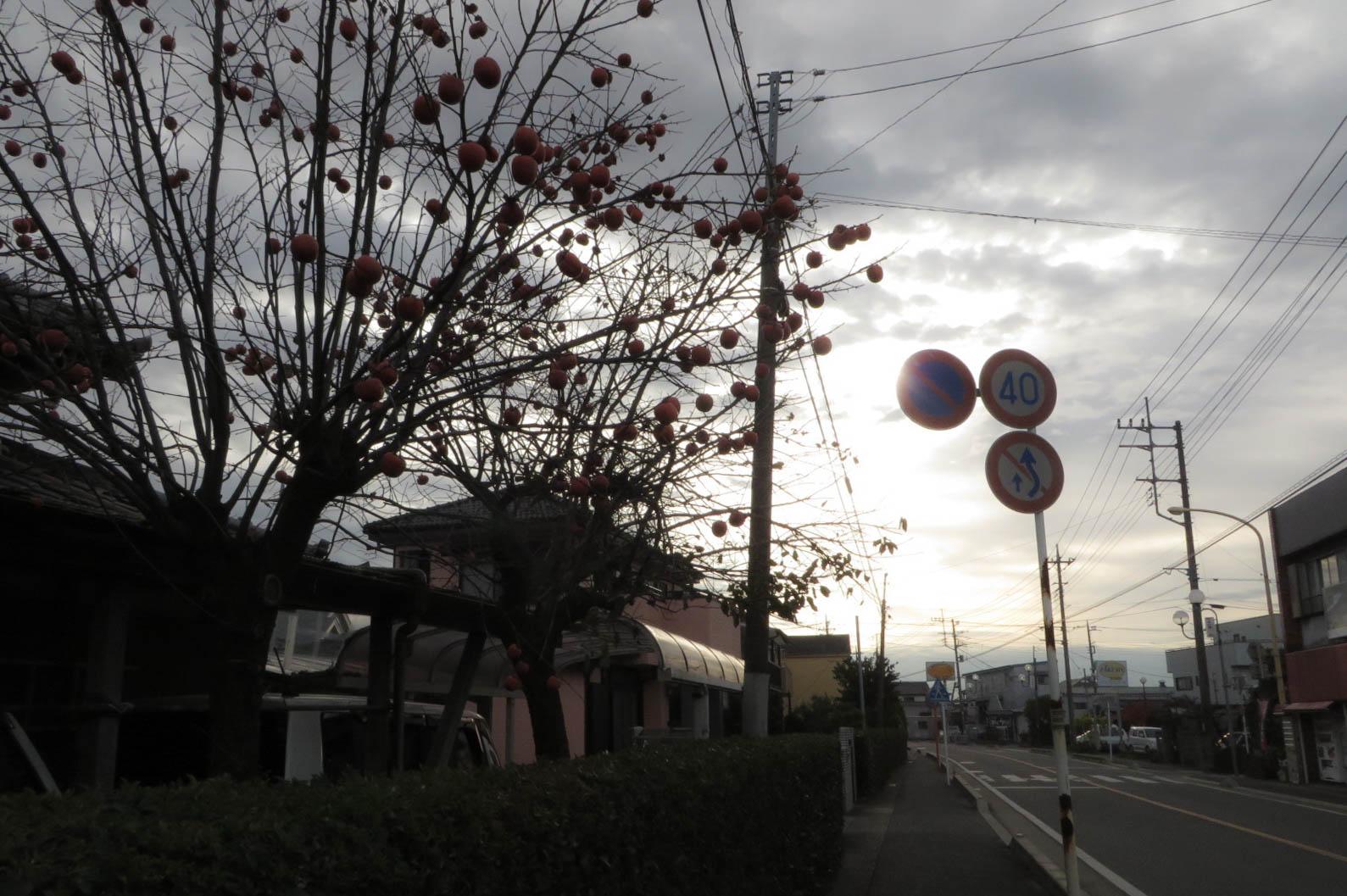 20141204_CanonSX280HS-2.jpg