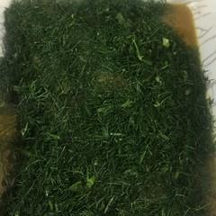 leaf, herb, moss,