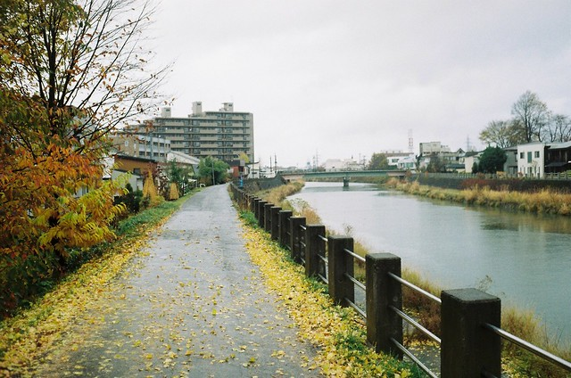 雨と黄色とGold100 minolta HI-MATIC F