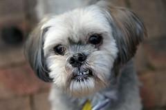 My dog - Daisy